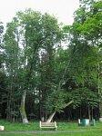 Липово, усадьба: парк, XIX в.