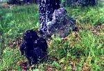 Дубровки, каменные кресты, XIV-XVII вв.