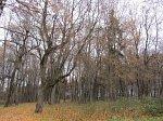 Двор-Низголово, усадьба: парк (фрагменты), XIX в.?