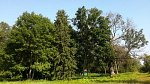 Двор-Плино, усадьба: парк (фрагменты), XIX в.