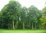 Глубокое (Жабин. р-н), усадьба: парк, XIX в.