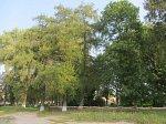 Озерцы (Глубок. р-н), усадьба: парк (фрагменты), XIX в.