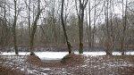 Пелище, усадьба: парк (фрагменты), XIX в.