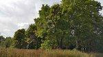 Стайки (Вилей. р-н), усадьба: парк, XIX в.
