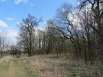 Тельман, усадьба: парк, кон. XVIII в.