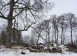 Торчицы, усадьба: парк, XIX в.