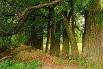 Верхнее Чернихово, усадьба: парк, XIX в.