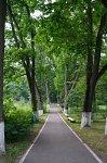Вольно, усадьба: парк, XIX в.