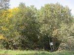 Ясенец (Баран. р-н), усадьба: парк (фрагменты), XIX в.