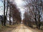 Двор-Гомель, усадьба: аллея въездная, XIX в.?