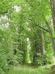 Двор-Жары, усадьба: парк, XIX в.