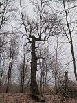 Хотенчицы, усадьба: парк (фрагменты), XIX-1-я пол. XX вв.?