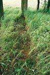 Литвяны, кладбище солдат 1-й мировой войны, 1915-18 гг.