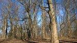 Луковец, усадьба: парк, XIX в.