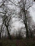 Мал. Жуховичи, усадьба Сомерсов (?): парк, XIX в.