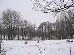 Марьина Горка, усадьба: парк (фрагменты), 2-я пол. XIX в.