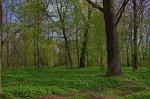 Нача (Ляхов. р-н), усадьба: парк, нач. XIX в.