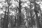 Рогозно (Брест. р-н), кладбище христианское: высокие деревянные кресты