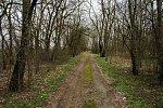 Рудка (Жабинк. р-н), усадьба: парк (фрагменты), 2-я пол. XIX в.