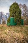 Саковичи, усадьба: парк: ель плакучая