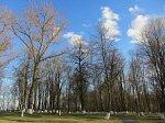 Славгород, усадьба:  парк, 1780-е гг.