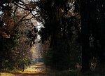 Совейки (Ляхов. р-н), усадьба: парк, 1850-е гг.