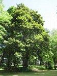 """Свислочь (Гродн. р-н), усадьба """"Свислочь"""": парк, XIX-нач. XX вв."""