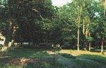 Юголин, усадьба: парк (фрагменты), XIX в.